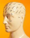 医疗器材0124,医疗器材,医学医药,头部 大脑 模具 石膏 医学用