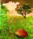 音乐遐想0032,音乐遐想,艺术,树叶 红色 风景