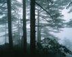 中华山水0222,中华山水,中国图片,树木 植物