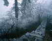 中华山水0223,中华山水,中国图片,冬雪 雪松 台阶