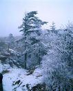 中华山水0235,中华山水,中国图片,雾凇 雪地 野外 纯洁