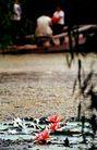 中国风情0299,中国风情,中国图片,荷花池 池塘 公园