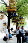 中国风情0301,中国风情,中国图片,鸟兽 休闲 娱乐