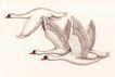 吉祥鸟0021,吉祥鸟,中国图片,天鹅 飞翔 羽毛