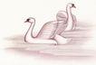 吉祥鸟0022,吉祥鸟,中国图片,白鹅 翅膀 水中
