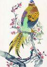 吉祥鸟0043,吉祥鸟,中国图片,枝头立着 梅花