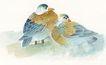 吉祥鸟0053,吉祥鸟,中国图片,鸳鸯 夫妻 一对