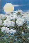 中国现代花鸟0188,中国现代花鸟,山水名画,月亮 白牡丹