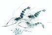 水下动物画0007,水下动物画,山水名画,沙底 国画 虾米