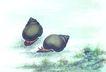水下动物画0009,水下动物画,山水名画,田螺 爬行 速度