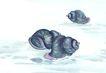 水下动物画0016,水下动物画,山水名画,黑色 螺壳 吸附