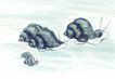 水下动物画0017,水下动物画,山水名画,爬行 一家子 迁徙