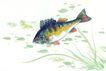 水下动物画0031,水下动物画,山水名画,鱼儿 生物 小草