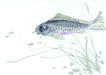 水下动物画0032,水下动物画,山水名画,水草 鲤鱼 动物