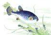 水下动物画0035,水下动物画,山水名画,鱼鳞 水墨画 中国画