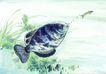 水下动物画0036,水下动物画,山水名画,古代名著 墨迹 食材