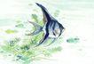 水下动物画0037,水下动物画,山水名画,五彩鱼 海洋生物 海鲜