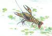 水下动物画0038,水下动物画,山水名画,虾子 河虾 画作