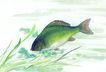 水下动物画0040,水下动物画,山水名画,