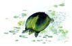 水下动物画0041,水下动物画,山水名画,乌龟