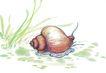 水下动物画0042,水下动物画,山水名画,水草