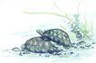 水下动物画0043,水下动物画,山水名画,两只乌龟