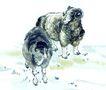 中国动物画0064,中国动物画,山水名画,绵羊 羊毛 羊角