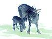 中国动物画0066,中国动物画,山水名画,羊羔 动物 可爱
