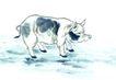 中国动物画0092,中国动物画,山水名画,猪 水墨 写生