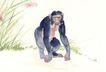 中国动物画0095,中国动物画,山水名画,长臂猿 描绘 图画