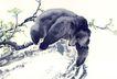 中国动物画0098,中国动物画,山水名画,艺术 水彩 名画