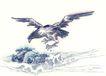 中国动物画0103,中国动物画,山水名画,一只鹰 飞起 海浪