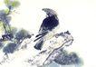 中国动物画0106,中国动物画,山水名画,老鹰 站石头上 松树