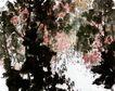傅抱石作品集0066,傅抱石作品集,中国传世名画,笔墨 豪放 潇洒