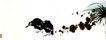 潘天寿作品集0035,潘天寿作品集,中国传世名画,小草 绿叶 风景