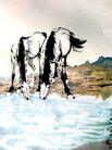 徐悲鸿作品集0073,徐悲鸿作品集,中国传世名画,一对 马儿 喝水