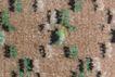 花毯0249,花毯,地毯,