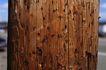 木材0019,木材,木材,