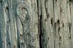 木材0035,木材,木材,