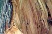 木材0039,木材,木材,