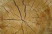 木材0040,木材,木材,