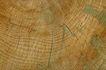 木材0041,木材,木材,