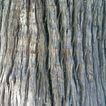 树皮0004,树皮,木材,