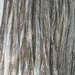 树皮0005,树皮,木材,