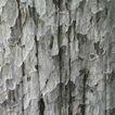 树皮0007,树皮,木材,