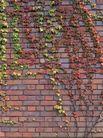 植物底纹0286,植物底纹,底纹,