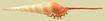 贝壳0026,贝壳,石头贝壳,