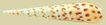贝壳0027,贝壳,石头贝壳,