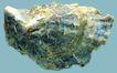 贝壳0036,贝壳,石头贝壳,