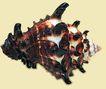 贝壳0039,贝壳,石头贝壳,
